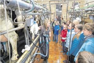 Bauernhof-5a-11-05-17